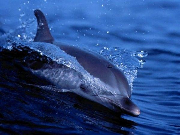 Les dauphins et les orques 070f6e8e