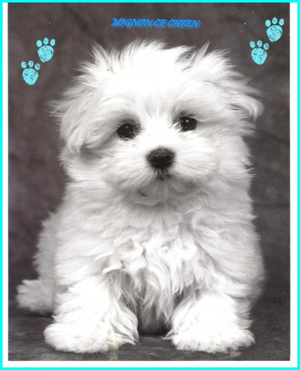 Les chiens - Page 6 E37affb0